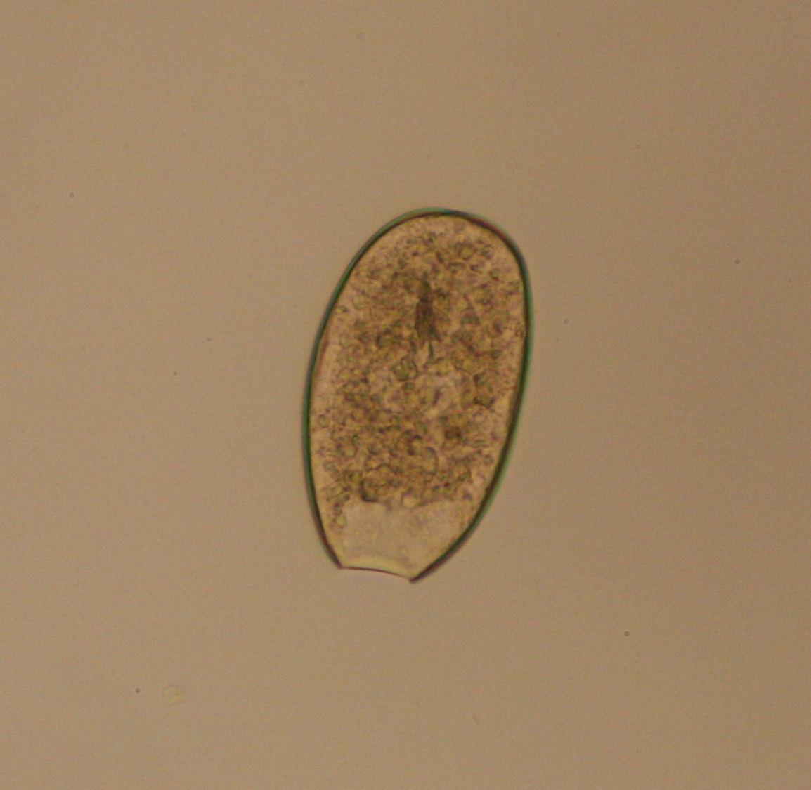 Identification Of Ticks
